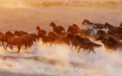 Reining in the BLM's wild horse crisis