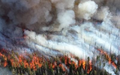 Delaying prescribed burns only feeds extreme wildfires